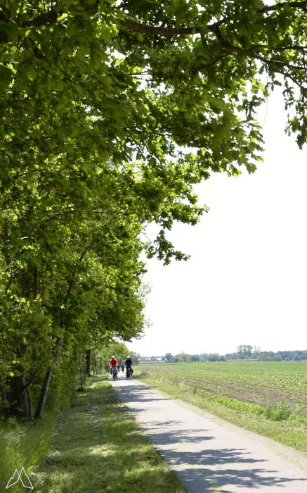Radfahrer auf dem Ostseeküsten-Radweg