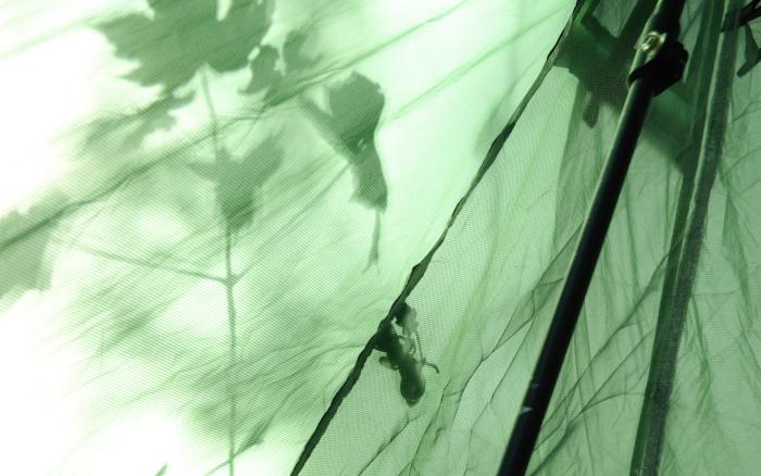 Zeltwand in Grün mit Schattenspiel in Form von Blättern